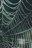 Beautiful cobwebs in autumn - vintage look. Beautiful cobwebs in autumn in frozen meadow - vintage look Royalty Free Stock Images