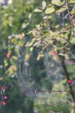 Beautiful cobwebs in autumn - vintage look. Beautiful cobwebs in autumn in frozen meadow - vintage look Stock Photography