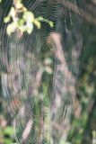 Beautiful cobwebs in autumn - vintage look. Beautiful cobwebs in autumn in frozen meadow - vintage look Stock Photo