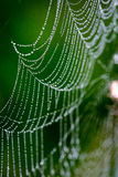 Beautiful cobwebs in autumn with spider Royalty Free Stock Photos