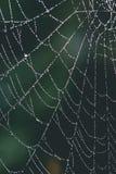 Beautiful cobwebs in autumn - vintage look. Beautiful cobwebs in autumn in frozen meadow - vintage look Royalty Free Stock Photos