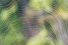 Beautiful cobwebs in autumn - vintage look. Beautiful cobwebs in autumn in frozen meadow - vintage look Stock Photos