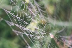 Beautiful cobwebs in autumn - vintage look. Beautiful cobwebs in autumn in frozen meadow - vintage look Stock Images