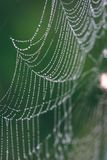 Beautiful cobwebs in autumn with spider - vintage look. Beautiful cobwebs with spider in autumn in frozen meadow - vintage look Stock Photography