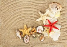 Free Beautiful Cockleshells And Starfishes Royalty Free Stock Photos - 41994058