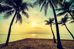 Beautiful coconut palm tree on the beach and sea Stock Photos
