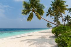 Coconut tree on a white sandy beach and crystal clear water in the Maldives stock images