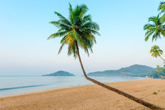 Beautiful coconut palms and beach Royalty Free Stock Images