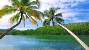 Beautiful coconut tree slope into the sea Stock Photos