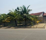 Beautiful coconut trees fenced royalty free stock image