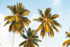 Coconut trees in Seychelles royalty free stock photos