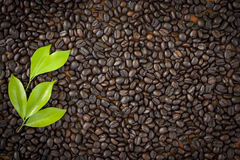 Beautiful Coffee grain for background texture Royalty Free Stock Photo