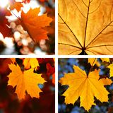 Beautiful collage of autumn Royalty Free Stock Photography