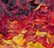 Beautiful collage background of autumn leaves from yellow to dark red stock photos