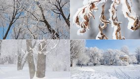 A beautiful collage - a winter forest, a fabulous view, a Christmas picture. stock footage