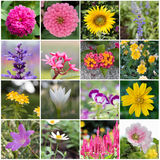 beautiful collection of flowers. Royalty Free Stock Photography