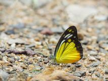 Butterfly on the ground Blurred view of natural background. Beautiful color Butterfly on the ground Blurred view of natural background royalty free stock images