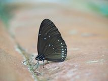 Butterfly on the ground Blurred view of natural background. Beautiful color Butterfly on the ground Blurred view of natural background stock photos