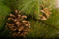 Beautiful color Christmas pine cone Royalty Free Stock Photo