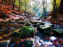 Beautiful mountains stream in autumnal beech forest Stock Photos