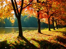 Beautiful autumnal alley Royalty Free Stock Photos