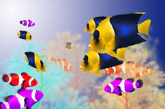 Beautiful color fishes Royalty Free Stock Images