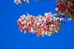 Beautiful color flowers with blue sky. Royalty Free Stock Photography