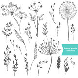 Beautiful color grass silhouette collection Stock Images
