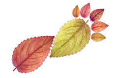 Beautiful color leaf footprint Royalty Free Stock Photos
