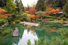 Beautiful color at the pond. Fall Color at Japanese Garden Royalty Free Stock Photo