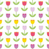 Beautiful color tulips on the white background. Vector seamless. Pattern Stock Photography