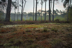 Beautiful coloration on forest floor at early morning walk Stock Photo