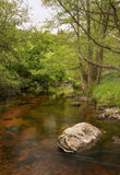 Beautiful coloration of this river flowing through green forest. Walking the wicklow way through the glencree valley is beautiful royalty free stock photos
