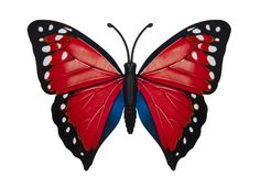 Beautiful colored butterfly Stock Photography