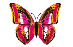 Beautiful colored butterfly Royalty Free Stock Photos