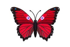 Beautiful colored butterfly Royalty Free Stock Image
