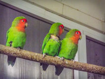 Beautiful colored couple parrot lovers Stock Photos