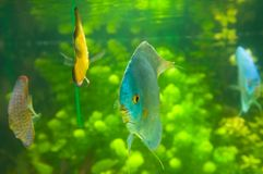 Beautiful colored fish Stock Photo