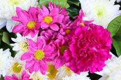 Beautiful colored flowers, fragrant in nature, pastel background. stock photography