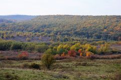 Autumn rainbow. Beautiful colored hills with the trees in all the colors, inside of the forest are the colored mushrooms Royalty Free Stock Photography