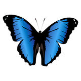 Beautiful colored icon blue butterfly on a white background. vec Royalty Free Stock Photos