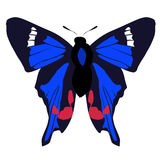 Beautiful colored icon blue butterfly on a white background. vec Stock Photos