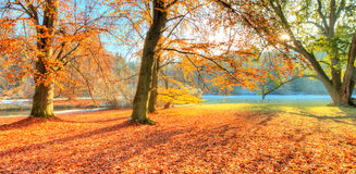 Beautiful colored trees in autumn, landscape photography royalty free stock photography