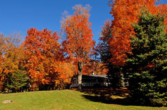 Beautiful colored trees in autumn. Royalty Free Stock Images