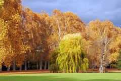 Fall in city oark. Beautiful colored trees during indian summer in Stuttgart`s Schlossgarten stock photo