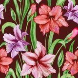 Beautiful colorful amaryllis flowers with green leaves on brown background. Seamless spring pattern. Watercolor painting. Hand painted floral illustration Stock Image