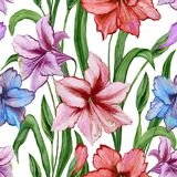 Beautiful colorful amaryllis flowers with green leaves on white background. Seamless spring pattern. Watercolor painting. Hand painted floral illustration Royalty Free Stock Photos