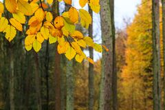 Beautiful colorful autumn leaves in a forest Royalty Free Stock Photo