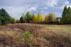 Beautiful Colorful Autumn Stock Images