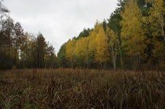 Beautiful Colorful Autumn Royalty Free Stock Photo
